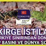 Çekirgeler Türkiye sınırından döndü